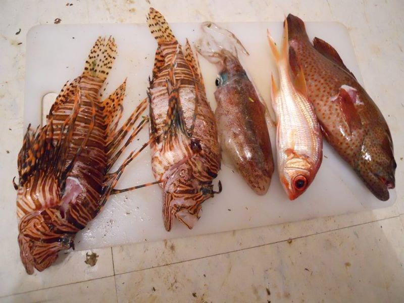 fish dinner 3
