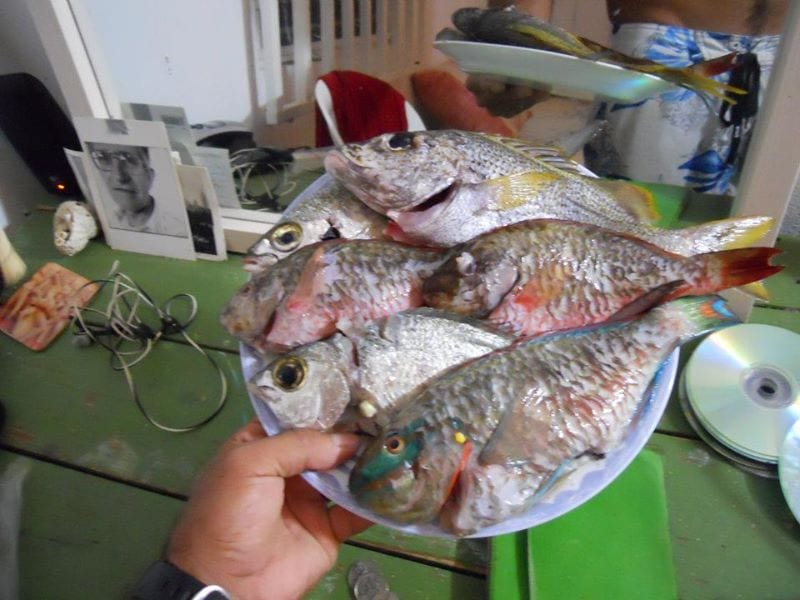 fish dinner 4